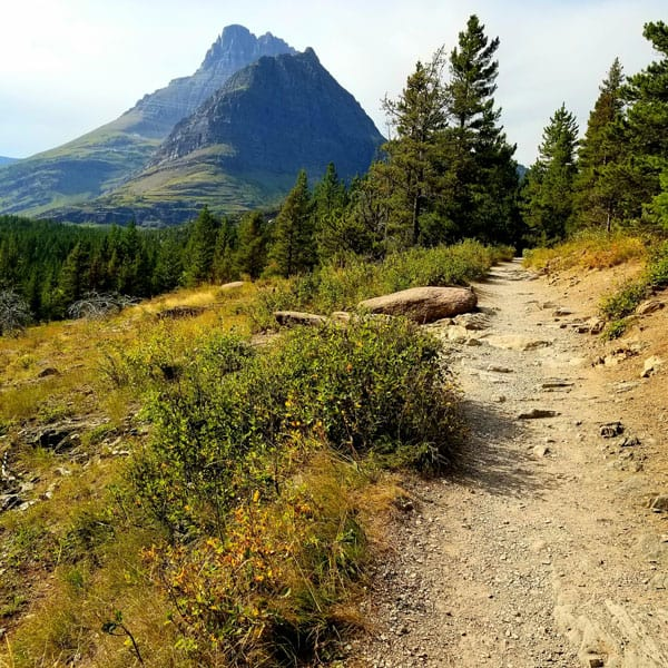 Glacier National Park Hike with view of the trail and trees and a mountain in the distance, sunny day
