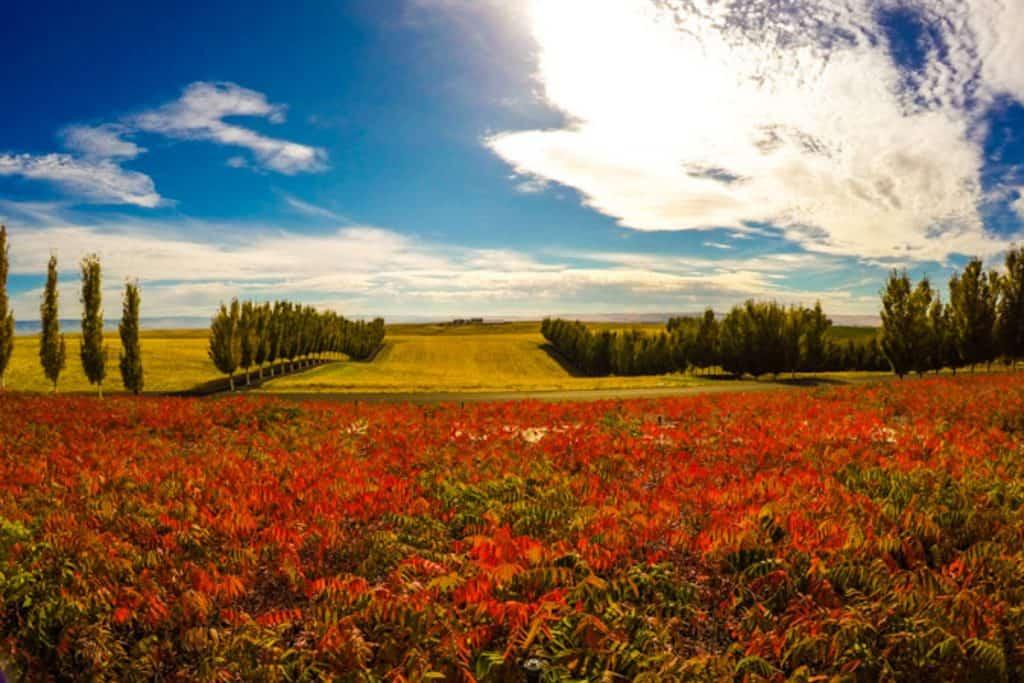 View of autumn colors and field in Walla Walla WA