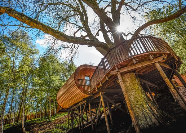 Fish Hotel view of Glamping Cotswolds Treehouse with the tree in the middle and sun peaking through