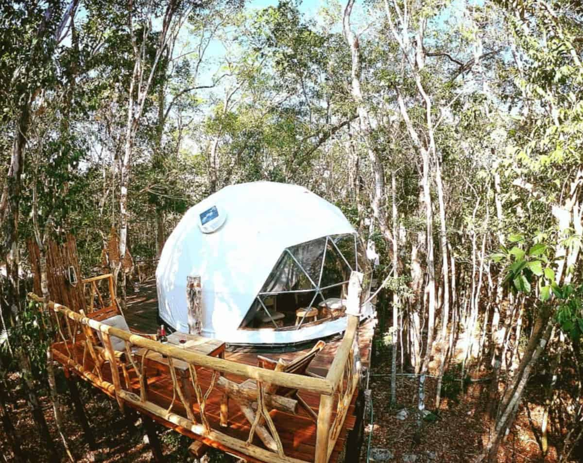 Glamping treehouse dome