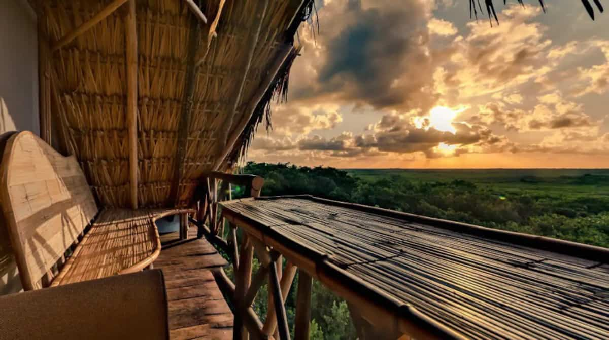 Glamping treehouse overlookingthe jungle at sunset