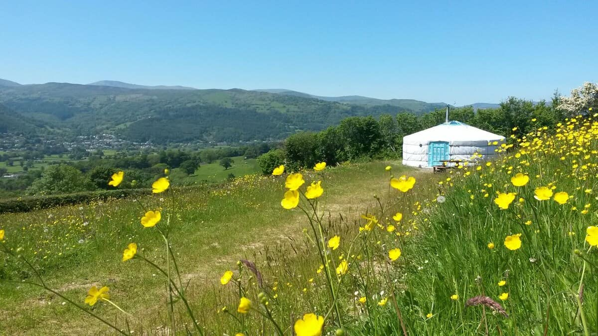 Glamping Yurts North Wales view of a yurt in a field with rolling hills in the background and yellow flowers in the foreground
