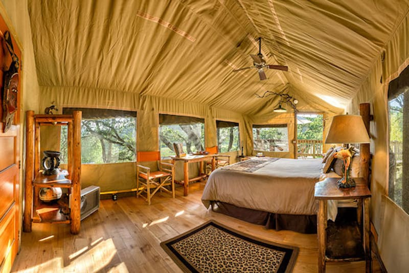 safari west tent glamping bay area view of inside with bed and safari decorations and furniture