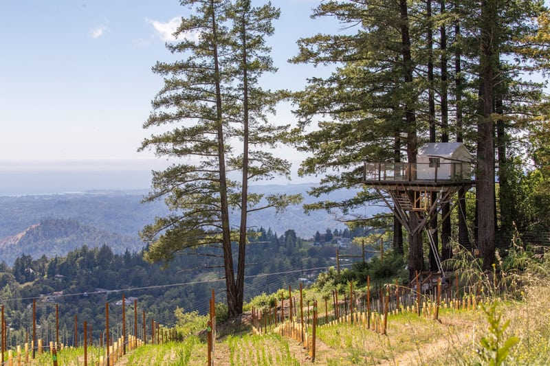 Bay Area Glamping Treehouse in a Vineyard view of the treehouse with glamping tent on it and the vineyard below it