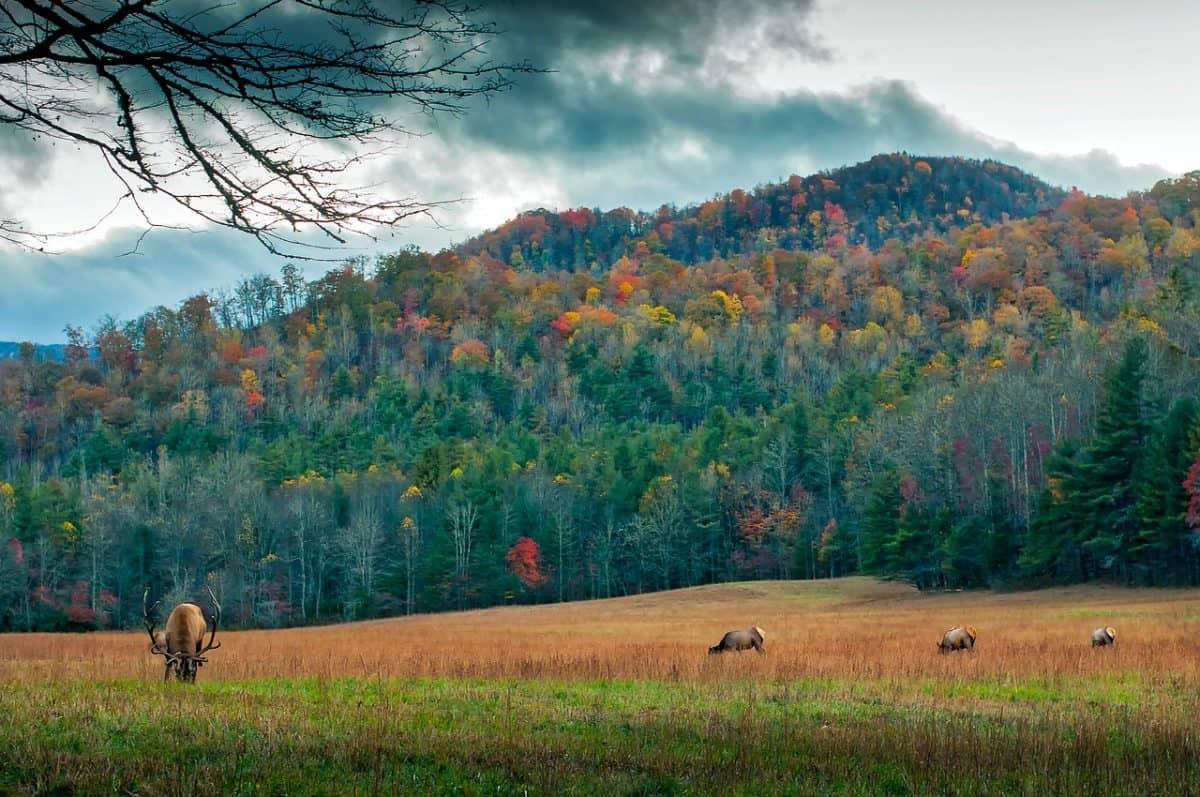 Stunning Treehouses North Carolina